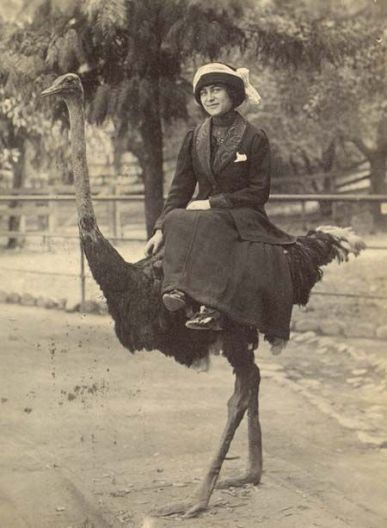 woman on ostrich